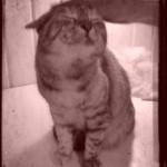 cato - als oude foto