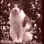 over katten_nubi_op dakje_als oude foto