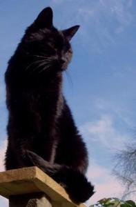 toef_vacht van de kat_bescherming